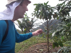 Picking coffee beans (only about 10 in case you are the farmer!)